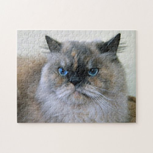 Himalayan Cat with Blue Eyes Puzzles