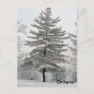 Hoar Frost Tree - Postcard postcard