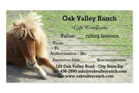Free Resume Cover Letter Certificate Templates For Horse Riding - Horseback riding lesson gift certificate template