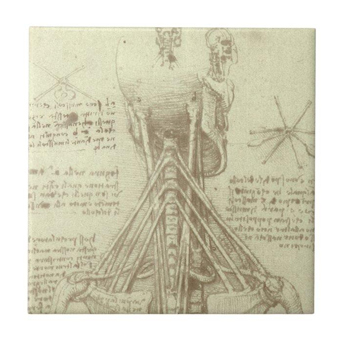 human anatomy spinal column by leonardo da vinci ceramic tile zazzle com