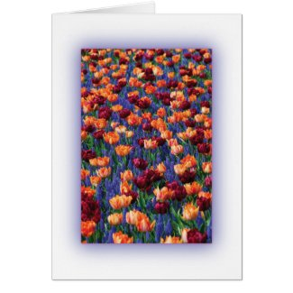 Hyacinth in Bloom Cards