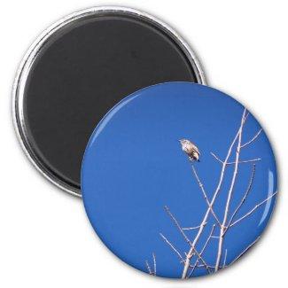 Infant Wood Thrush Magnet magnet