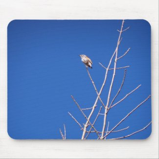 Infant Wood Thrush Mousepad mousepad