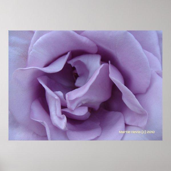 Inside a Lavender Rose print