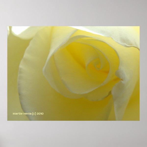 Inside a White Rose Poster