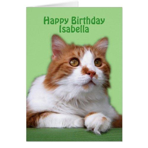 Isabella Happy Birthday Orange and White Cat