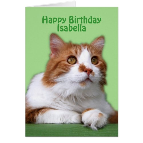 Isabella Happy Birthday Orange and White Cat Greeting Card