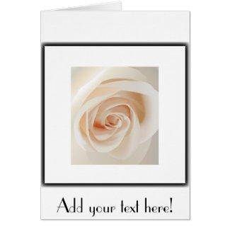 Ivory Rose Greeting Cards