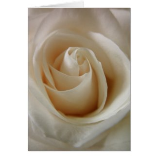 White Rose Bud Greeting Card by S.Lynnette