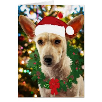Joy to thee Puppy Stationery Note Card