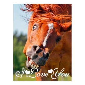 Just Horsing Around Horse I Love You Post Cards