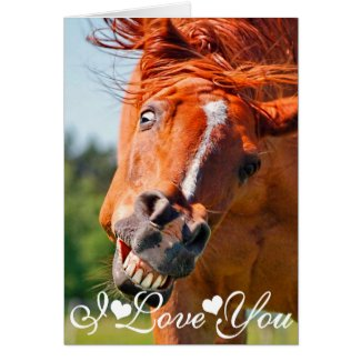 Just Horsing Around Horse Photograph I Love You Card