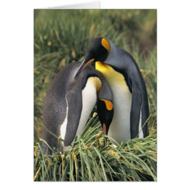 King penguins Lovers Card