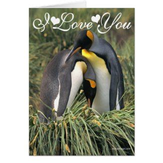 King penguins Lovers Photo Image I Love You Greeting Card
