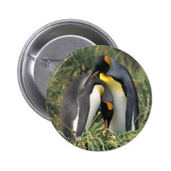 King penguins Lovers Pinback Button