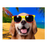 ❤️ Labrador puppy wearing red and yellow glasses postcard