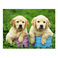 Labrador Retriever Puppy Dog Postcard