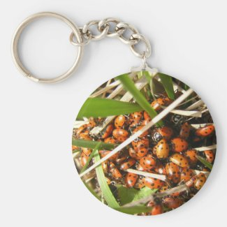 Ladybugs (Coccinellidae) Key Chains