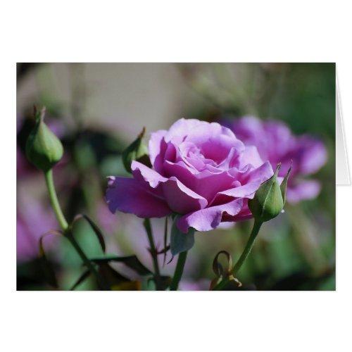 Lavender Rose Card card