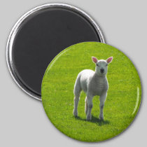 Little Lamb magnets