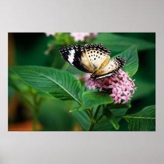 Little Leopard Wings Print print