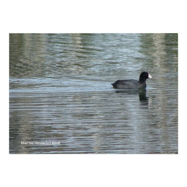 Lone Duck II zazzle_print