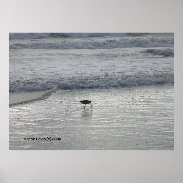 Lone Sandpiper at Watsonville Beach print
