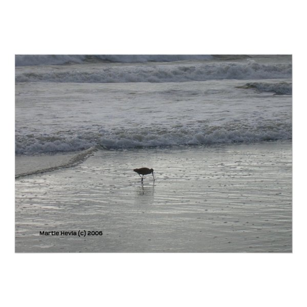 Lone Sandpiper at Watsonville Beach zazzle_print