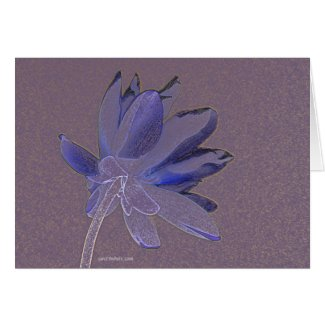 lotus in purple and blue