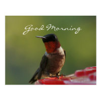 Male Hummingbird Postcard- customize Postcard