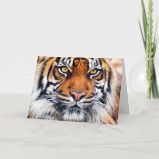 Male Siberian Tiger Paint Photograph Card
