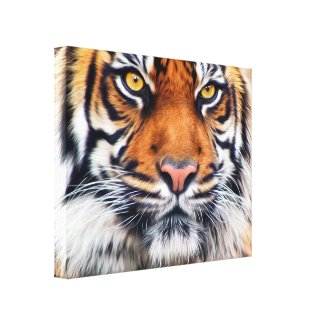 Male Siberian Tiger Stretched Canvas Print