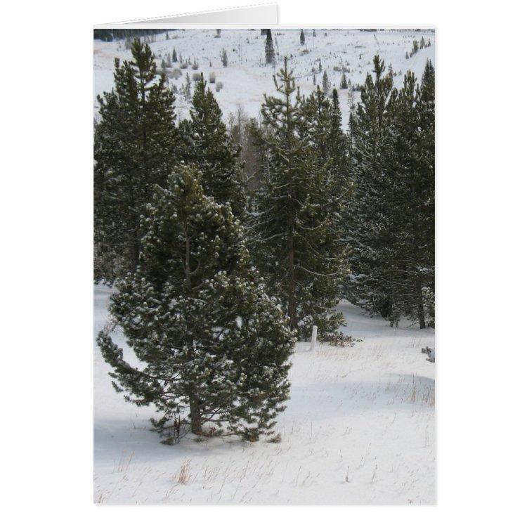 Merry Christmas Evergreen Greeting Card