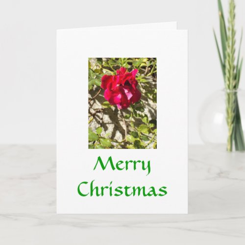 Merry Christmas Rose Card card
