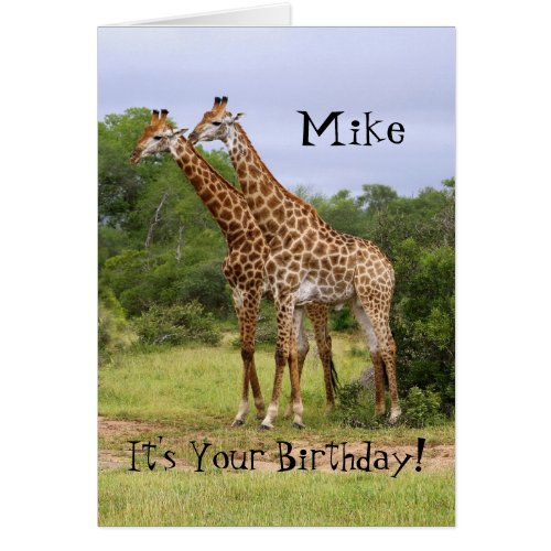 "Mike ""Go Wild"" Happy Birthday Giraffes Card"