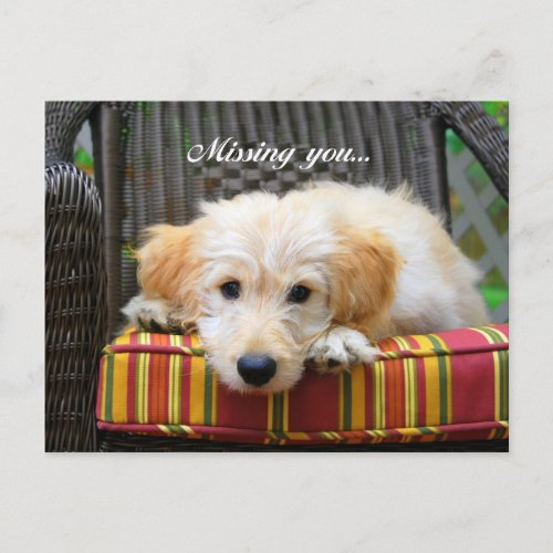Missing You Golden Doodle Postcard postcard