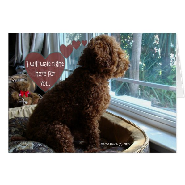 Missing You - Poodle - Card