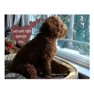 Missing You - Poodle - Postcard