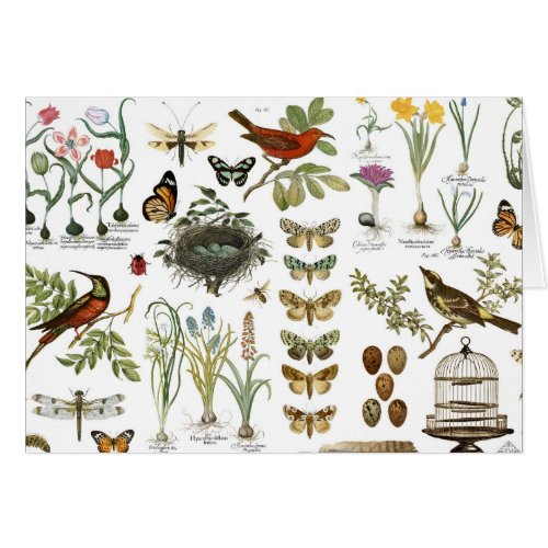 modern vintage french botanical birds and flowers