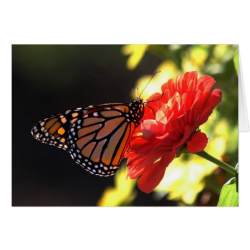 Monarch Butterfly on Red Zinnia Greeting Card