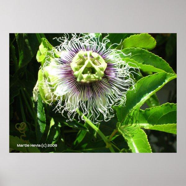 Monster Flower Poster