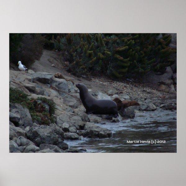 Monterey Watering Hole zazzle_print