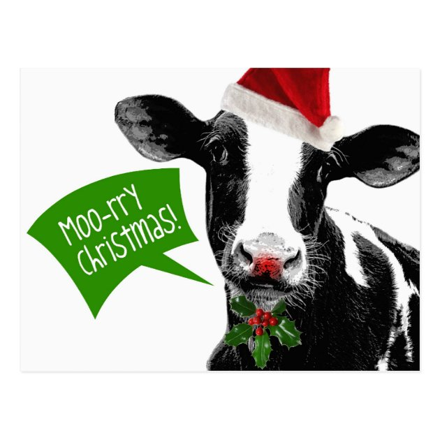 Moo Rry Christmas Funny Holiday Cow In Santa Hat Postcard