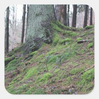 Mossy Tree Stump Square Sticker