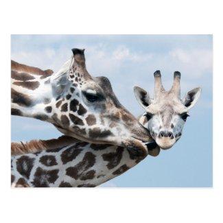 Mother giraffe kisses her calf post card
