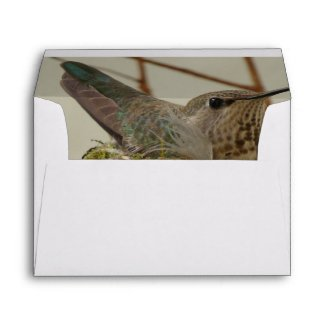 Mother Hummingbird Envelope envelope