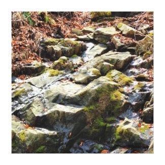 Mountain Stream in the Blue Ridge Mountains Canvas Print