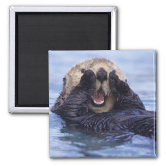 NA, USA, Alaska. Sea otters are the largest Fridge Magnets