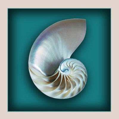 Nautilus shell magnet magnet