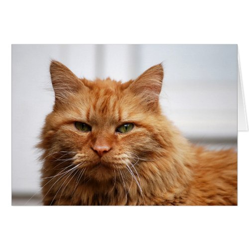 Norwegian Forest Cat card